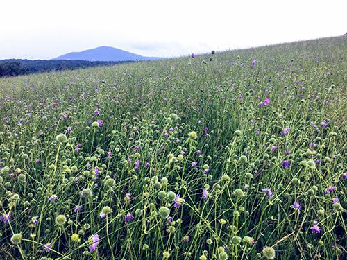 bennington_meadow
